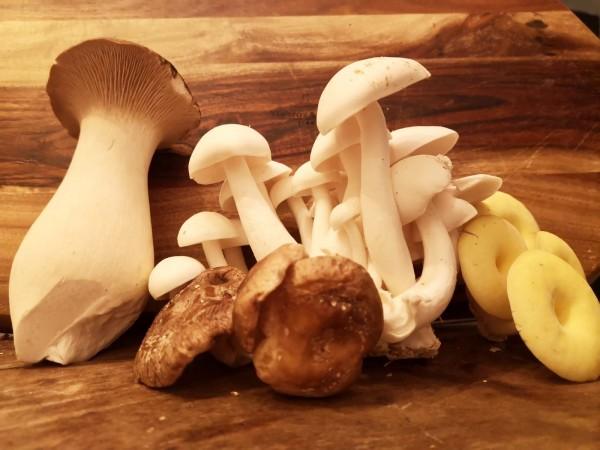 Frische BIO Kräuterseitlinge Pilze aus dem Saarland
